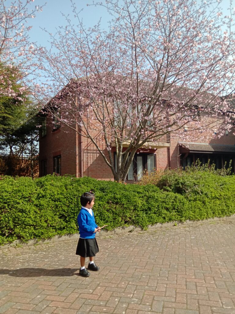 My 4 year old daughter standing in front of a Cherry Blossom tree.